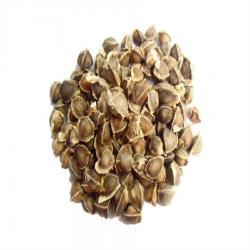 สารสกัด เมล็ดมะรุม 100 ml.
