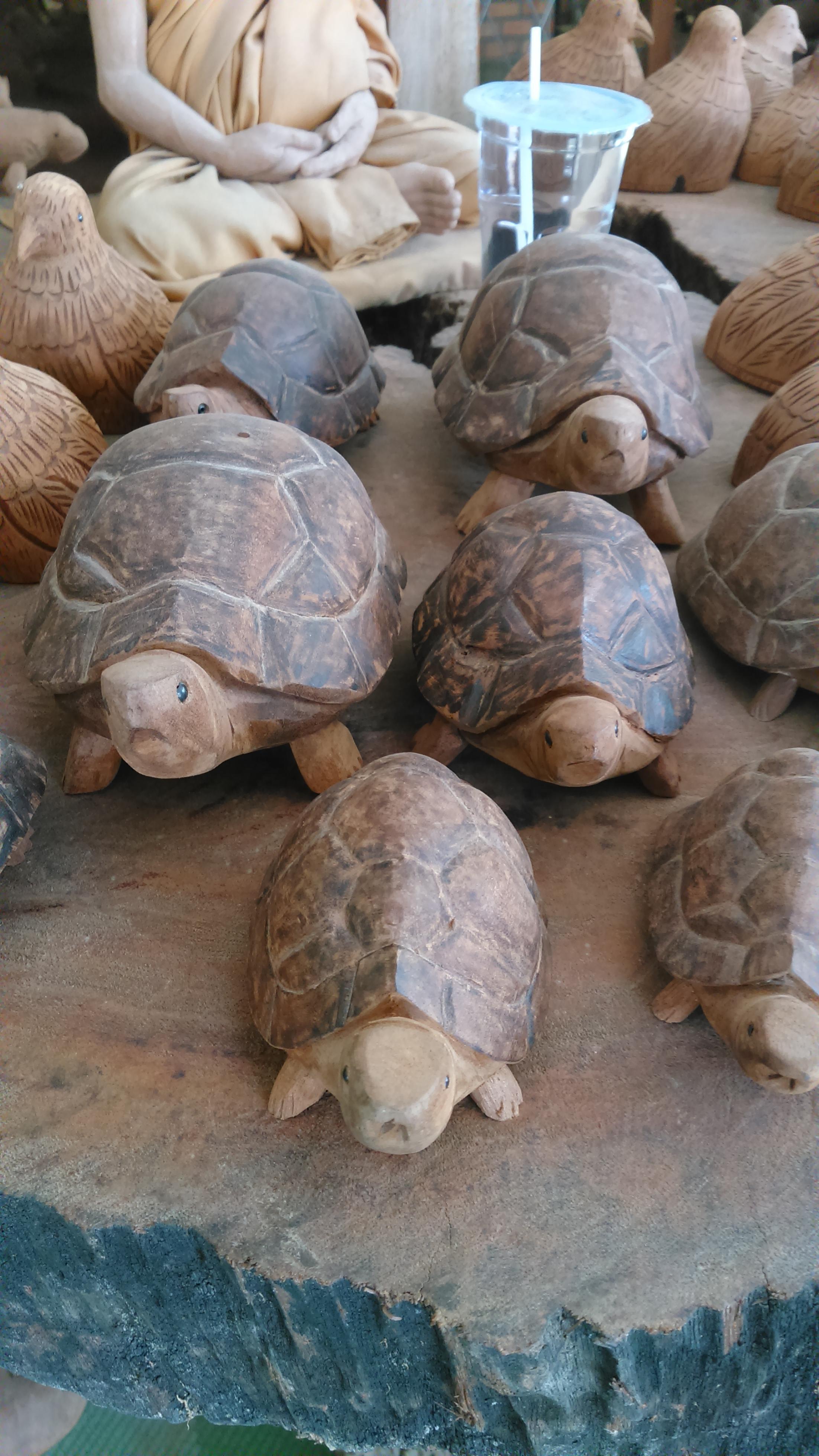 เต่ามงคล ไม้เทพทาโร