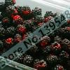 ราสเบอรี่ สีดำ Black Raspberry / 20 เมล็ด