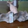 ฝูงปลาพะยูน ไม้เทพทาโร