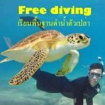 เรียนFree diving สงขลา