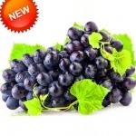 องุ่นดำไร้เมล็ด Seedless Black Grape Seeds / 10 เมล็ด