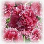 การดูแลไม้ดอกไม้ประดับในช่วงฤดูหนาว