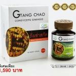 GTC ถั่งเช่าทิเบต Gold Tang Chao Cordyceps Militaris