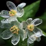 ดอกไม้ที่มีความแปลกมหัศจรรย์