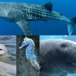 Eco tour ทัวร์อนุรักษ์ชุมชนชาวเล และสัตว์ทะเล