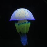 แมงกะพรุน mastigias papua เรืองแสง สีน้ำเงิน