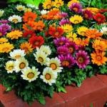 ข้อควรพิจารณาในการเลือกซื้อไม้ดอกไม้ประดับ