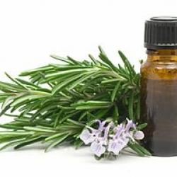 สารสกัดโรสแมรี่ ( Rosemary Oleoresin Extract)