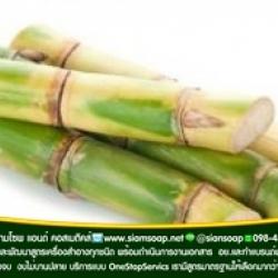 สารสกัด ต้นอ้อย(SugarCane Extract)