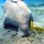 ฝูงปลาพะยูน ไม้เทพทาโร thumbnail 2
