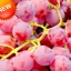 องุ่นแดงหวาน Sweet Red Grape Seeds / 10 เมล็ด thumbnail 2