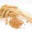 สารสกัดจมูกข้าวสาลี (เมล็ด) (Wheat protein extract)