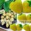 สตรอเบอรี่สีเหลือง Yellow Strawberry /30 เมล็ด thumbnail 2