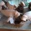 ฝูงปลาพะยูน ไม้เทพทาโร thumbnail 1