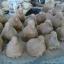 นกคุ้ม ไม้เทพทาโร thumbnail 1