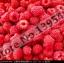 ราสเบอรี่ แดง Red Raspberry / 20 เมล็ด thumbnail 1