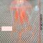 แมงกระพรุนซิโคลน สีส้ม (ขนาดกลาง สีสดใสไม่เรืองแสง) thumbnail 3