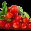 สารสกัด แบร์เบอร์รี่(Bearberry Extract)