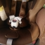 คาร์ซีท Aprica รุ่น Fladea DX น้ำตาลทอง รหัสสินค้า : S0021 thumbnail 6
