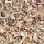 เมล็ดมะรุมพันธุ์ใหญ่ / 20 เมล็ด thumbnail 4
