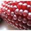 ข้าวโพดสตรอเบอรี่ Strawberry Cron / 10 เมล็ด thumbnail 2
