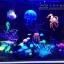 แมงกระพรุนซิโคลน สีฟ้า(ขนาดเล็ก สีสดใสไม่เรืองแสง) thumbnail 3