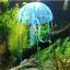 แมงกระพรุนซิโคลน สีฟ้า (ขนาดกลาง สีสดใสไม่เรืองแสง) thumbnail 1