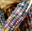 ข้าวโพดพลอย Glass Gem Ornamental Corn / 5 เมล็ด thumbnail 2