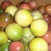 เมล็ดเสาวรส (คละสี) 20 เมล็ด