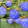 ราสเบอรรี่ สีฟ้า Blue Raspberry / 20 เมล็ด