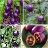 มะเขือเทศสีม่วง Purple Tomato / 10 เมล็ด