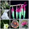ดอกไม้หายาก (คละชนิด) Rare Flower Mix / 20 เมล็ด