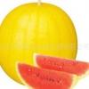 แตงโมสีเหลืองลูกใหญ่หวาน / 5 เมล็ด
