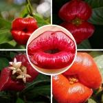 ดอกฮุกเกอร์ ลิป Hooker's Lips / 20 เมล็ด