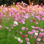 แต่งบ้านจัดสวน ด้วยเมล็ดพันธุ์ดอกไม้ต่างประเทศ