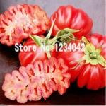 มะเขือเทศ Big Zapotec ruffled tomato seeds / 20 เมล็ด