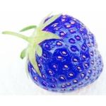 สตรอเบอรี่ สีฟ้า /30 เมล็ด