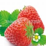 สตรอเบอรี่ Germany Super Big Strawberry /30 เมล็ด