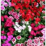 จัดดอกไม้สวยให้เข้ากับวิถีคนเมือง