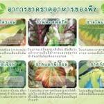อาการขาดธาตุอาหารหลักของพืช