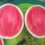 แตงโมไร้เมล็ดลูกใหญ่ / 10 เมล็ด thumbnail 2