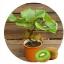 กีวี สีเขียว Green Kiwi / 10 เมล็ด thumbnail 1