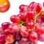 องุ่นแดงหวาน Sweet Red Grape Seeds / 10 เมล็ด thumbnail 1