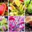 กาบหอยแครง(ดักแมลง) Venus Flytrap / 10 เมล็ด thumbnail 1