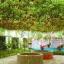 มะเขือเทศต้น Tomato tree seeds / 10 เมล็ด thumbnail 2