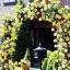 กุหลาบเลื้อย สีเหลือง Yellow Climbing Rose Seeds / 10 เมล็ด thumbnail 1