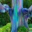 ยูคาลิปตัส สีรุ้ง Rainbow Eucalyptus / 30 เมล็ด thumbnail 2