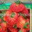 สตรอเบอรี่ Giant Strawberry /30 เมล็ด thumbnail 2