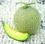 แคนตาลูป Cantaloupe Melon Seeds / 10 เมล็ด thumbnail 2